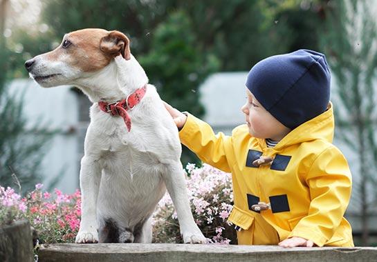 Menino com mais ou menos 2 anos com touca e casaco amarelo fazendo carinho em cachorro de cor branca com marrom - Clínica do Pulmão